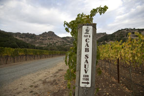Stag's Leap Wine Cellars - FAY Estate Vineyard