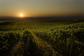 Columbia Crest, Vineyard, Long Shot, Sunset