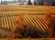 Thanksgiving in Wine Country Image