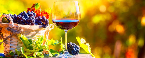 Glass of wine in a vineyard
