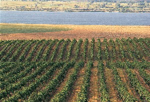 Cre_vineyard_on_river-small